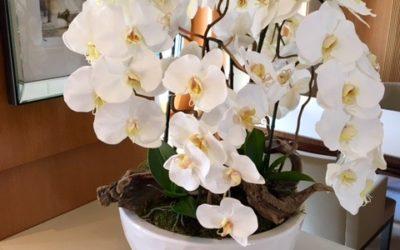 Super yacht flowers 1668